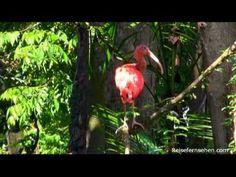 Brasilien / Brazil powered by Reisefernsehen.com - Reisevideo / travel video