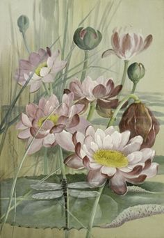 Giant Waterlily by Marian Ellis Rowan (Australia, 1848–1922), an artist, naturalist and explorer