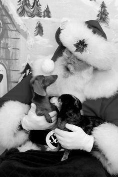 Miniature Dachshunds, Cutest Animals, Dogs, Cute Animals, Pet Dogs, Adorable Animals, Dog, Doggies