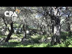 Land for sale, just from the idyllic beach of Agni, North East Corfu-CPA 3685 Corfu Island, Corfu Greece, Land For Sale, Beach, Plants, Seaside, Plant, Beaches, Planting
