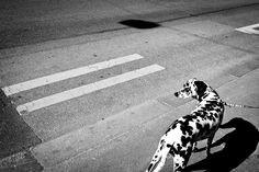 Enrico Markus Essl is a photographer, who was born in 1970 in Linz, Upper Austria, raised in Salzburg, and currently based back in Linz. Dog Photography, Street Photography, Beautiful Streets, Color Street, Cute Animals, Black And White, Dogs, Travel, Inspiration