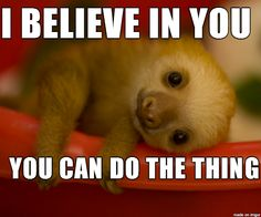 motivational sloths - Google Search Animals And Pets, Baby Animals, Funny Animals, Cute Animals, Animal Tumblr, Animal Crafts, Funny Love, Indie Brands, Animal Paintings