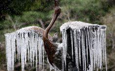 Pássaro descansa nas costas da escultura de uma ave em fonte de um parque de Tóquio, Japão. Devido às baixas temperaturas dos últimos dias, ...