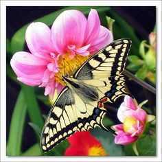 ~~ Opět bude léto  [The Summer'll Be Again] ~~  Butterfly and flowers