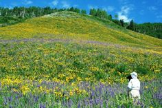 Colorful mountain meadows beckon in Crested Butte. (Photo: Gunnison-Crested Butte Tourism Association)