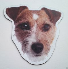 ***Jack Russell Terrier Dog Magnet***Anywhere / Car Magnet