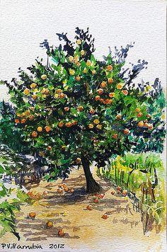 """""""Naranjo / Orange Tree"""". Watercolor."""