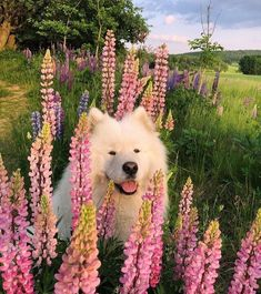 Image about cute in Dog + Cat by Jung Kyung-Soon Cute Puppies, Cute Dogs, Dogs And Puppies, Doggies, Cute Creatures, Beautiful Creatures, Cute Baby Animals, Animals And Pets, Dog Cat