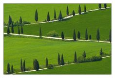 Cypresses between La Foce and Chianciano Therme. They were planted by Cecil Pinsent and the writer Iris Origo as part of a scheme to improve the landscape of what was then among Italy's most desolate regions.