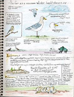 BWD gives you tips on all things bird journaling. Use our tips, guidelines, and journal samples to create your own bird watching journal Journal Sample, Art Journal Pages, Art Journals, Journal Ideas, Sketch Journal, Travel Journals, Journal Prompts, Journal Inspiration, Garden Journal