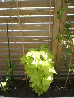 fabrication, tuteur, treillis, potager, balcon, atelier pratique, do it yourself, recuperation, vignes, tomates cerises