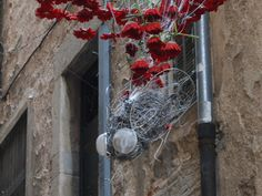 Una mosca entre flores (2012)