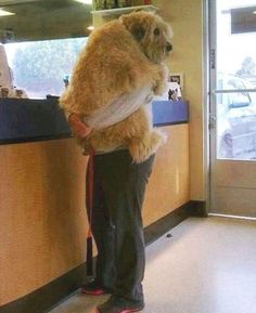 Big Dogs that still think they are puppies. (3)