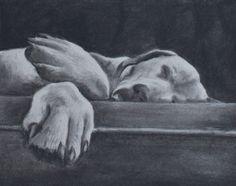 Yellow Labrador Retriever 8x10 original charcoal by RuthieKSutter,