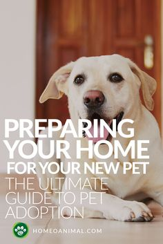 Preparing Your Home – The Ultimate Guide to Pet Adoption Here are tips for preparing your home for new pet. These home preparation tips to welcome new pet helped us a lot, & hope you will find them useful as well Dog Care Tips, Pet Care, Pet Tips, Open Adoption, Foster Dog, Pet Health, Animal Rescue, Animal Shelter, Pets