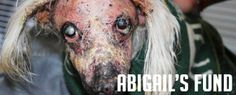 What is Abigail's Fund? As the founder of A Loving Goodbye and Hendrick Boards, I see the abuse, neglect and torture of animals on a daily basis. Abigail's abuse was the most horrendous case I have ever personally witnessed – not only because of the extent of the harm done to Abigail, but also the …