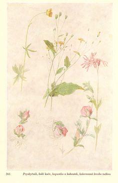 Studie květin,Josef Mánes Studios, Heaven, Painting, Sky, Heavens, Painting Art, Studio, Paintings, Painted Canvas