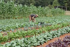 Growing Small Farms is the program of Debbie Roos, Agriculture Agent for the Chatham County Center of North Carolina Cooperative Extension.