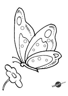 Colouring Page Of Butterfly