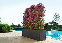 lechuza planter  TRIO Cottage 40 black All-in-One Set