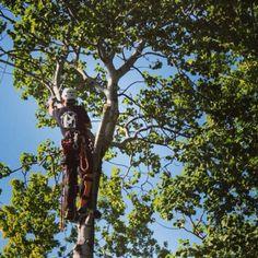 #Silky #Sugoi #Arborist #Tree #Surgeon