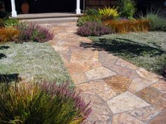 silver carpet (Dymondia margaretae), a drought-tolerant ground cover that can handle foot traffic