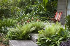 Mix of ferns and other similar sized plants for the bed in front of the verandah