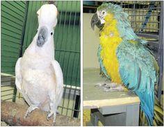 A Parrot Sanctuary for Geriatric Parrots: World Parrot Refuge: