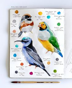 Tools: Polina Bright synthetic brush ( cruelty free ) sketbook Birds by Polina Bright Watercolor Sketchbook, Watercolor Brushes, Watercolor Bird, Art Sketchbook, Watercolour Painting, Watercolor Portraits, Watercolors, Bird Drawings, Cool Drawings