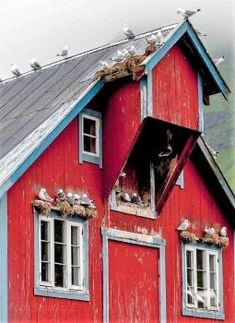 A Bird Barn. this old barn is for the birds! Lofoten, Country Barns, Country Living, Country Life, Country Roads, Barn Pictures, Bird Barn, Barns Sheds, Red Barns