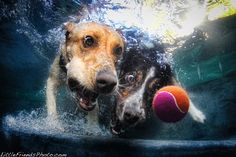 Underwater Dogs series by Seth Casteel. Adorable!