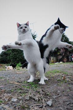 Népi tánc. cats :3