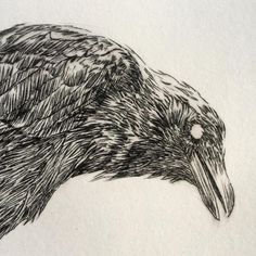 crow etching - Google Search