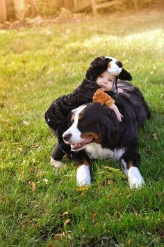 Bernese Mountain Dog Halloween costume Dog Puppy Hound Dogs Hunting Puppies #BerneseMountainDog