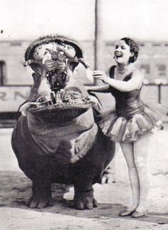 1930s circus performer with hippo