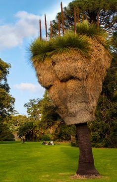 Old Grass tree in Royal Botanic Gardens Melbourne Australia