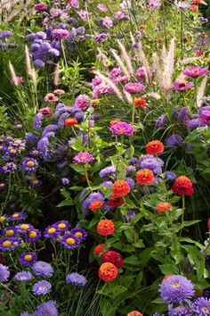 annual, annual plant, association, Asteraceae, bed, Callistephus, China aster, combination, compositae, flora, flower, flowering, garden, mixed planting, perennial, perennial border, perennial garden, plant, plant combination, plant part, planting combination, summer, summer flower, summerly, vertical, Zinnia
