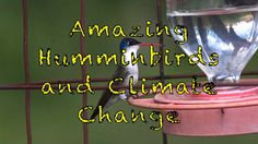 Amazing Hummingbirds and Climate Change!!