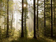 Fototapeta na zeď čtyřdílná FTS 0181 forest, velikost 360 x 254 cm