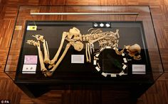 Mystery: The skeleton - nicknamed Racton Man - was found with an extremely rare…
