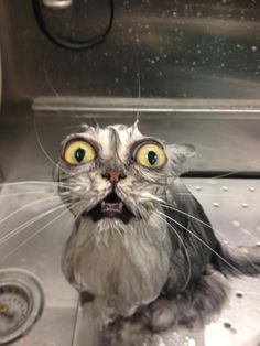 cat bath- it gets better every time i look at it