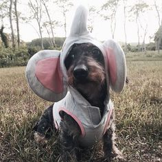 Our Martha Stewart Pets® Elephant Hoodie is perfect for costume parties or fun photo opportunities. Only at PetSmart for $13.99. (Photo credit @beangoods)