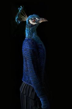 Second Skins: Fashionably Dressed Animals Photographed by Miguel Vallinas