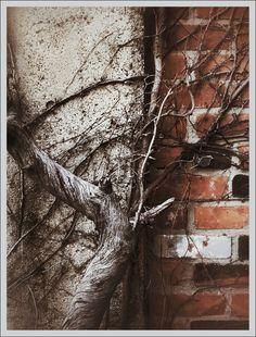 iPhoneography Frits's Garden - Armin Mersmann