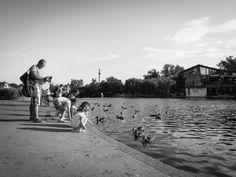 kids children ducks -  kids children ducks free stock photo Dimensions:4000 x 3000 Size:2.06 MB  - http://www.welovesolo.com/kids-children-ducks/