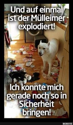 Best pictures, videos and sayings and it comes daily n - Lustige bilder - Humor Funny Animal Videos, Funny Animal Pictures, Funny Photos, Funny Images, Funny Animals, Cool Pictures, Cute Animals, Daily Pictures, Funny Videos