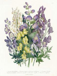 Коллекция картинок: Старинные ботанические принты ,часть3