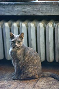 Stella, the cat of West Hill Hardware in Akron, Ohio.~ Photo Cred: Shane Wynn