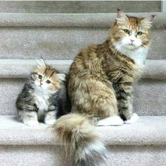 Mommy and #kitty ❤️