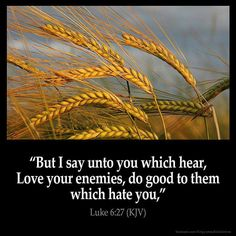 The Bible preaches so much about love, and that is so beautiful. Despite others using hated, anger, and jealousy to try and bring you down, rise above it, and be the bigger person who does not let such negativity into your life. You will live a happier, less stressful, and more fulfilling life